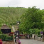 11 viininviljelystä