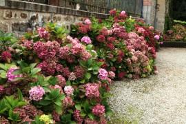 22 kukkia etelässä