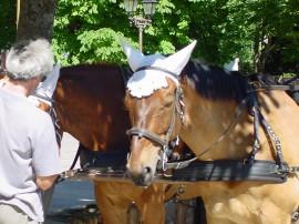 34 Carcassonnen hevosvaljakko