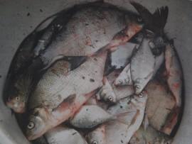 Vesiseminaarissa todettiin, että kaikilla järvillä tulisi lisätä kalastamista.