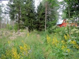 Esakallio-Hovimäki -reitin näkymiä.