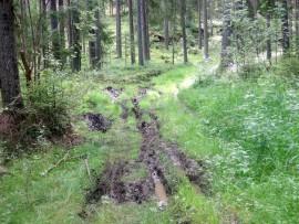 Esakallio-Hovimäki -reitillä on viihtynyt jäljistä päätellen kaksipyöräinen moottoriajoneuvokin.