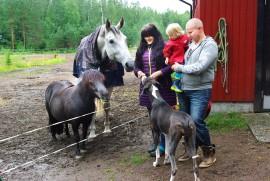 Alina Kiuru ja Marko Blomberg sekä poika Leo nauttivat pihapiirin eläinten seurasta.