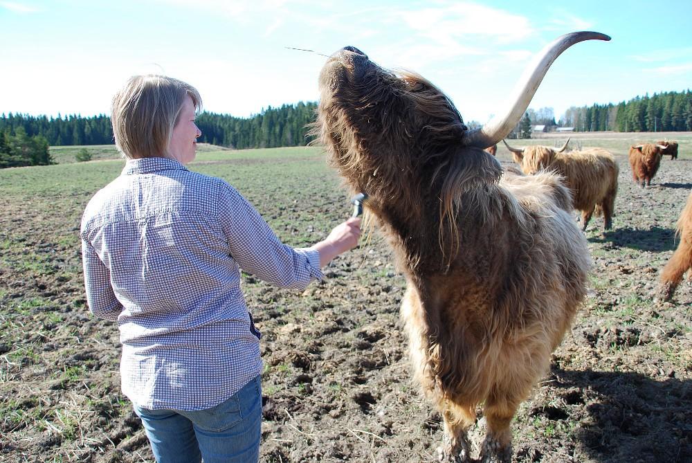 Maanviljelijä Sonja Tiilikainen perusti Someron seudun  suoramyyntitilat  sivuston Facebookiin.  Hänellä on kasvinviljelytila Vähä-Hirvelässä, jossa hän kasvattaa myös ylämaankarjaa.
