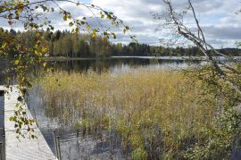 Oinasjärvi ranta kaislikko puut laituri Viuvala